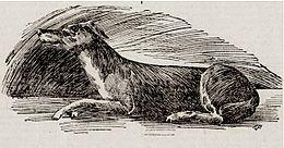 Dog_Lazarus.jpg