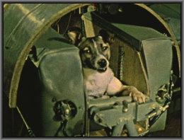 Laika-in-der-Sputnik-2.jpg