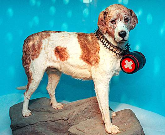 Lawinenhund-Barry.jpg